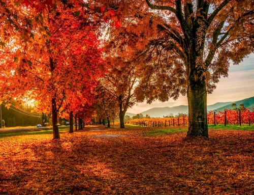 Autumn Festival in Bright